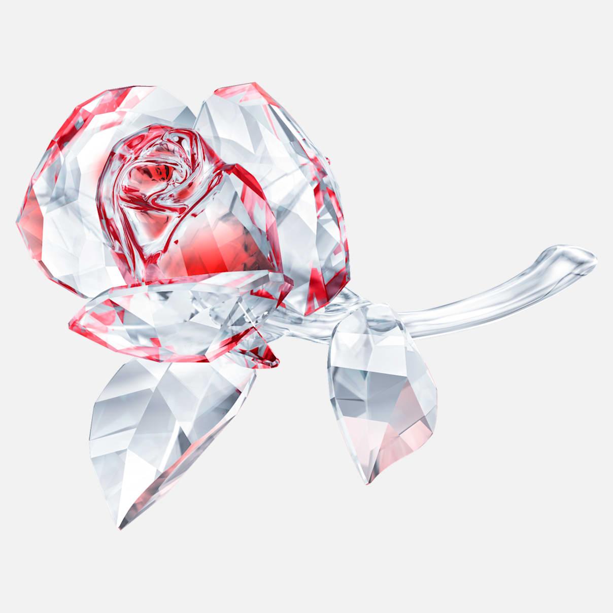 Blühende Rose, Rot