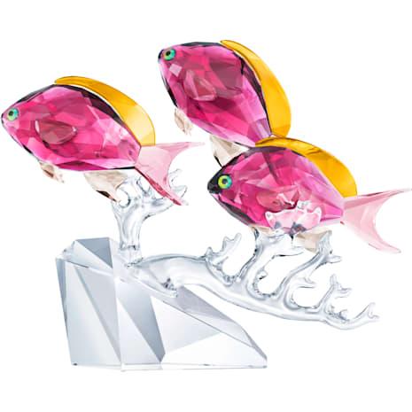 Trío de peces Anthias - Swarovski, 5428652